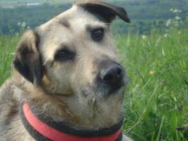Naturnah bietet eine hundefreundliche Therapie-Praxis