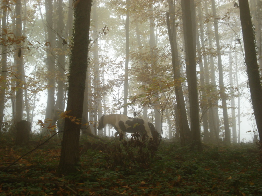 Waldbaden mit Pferden Naturnah